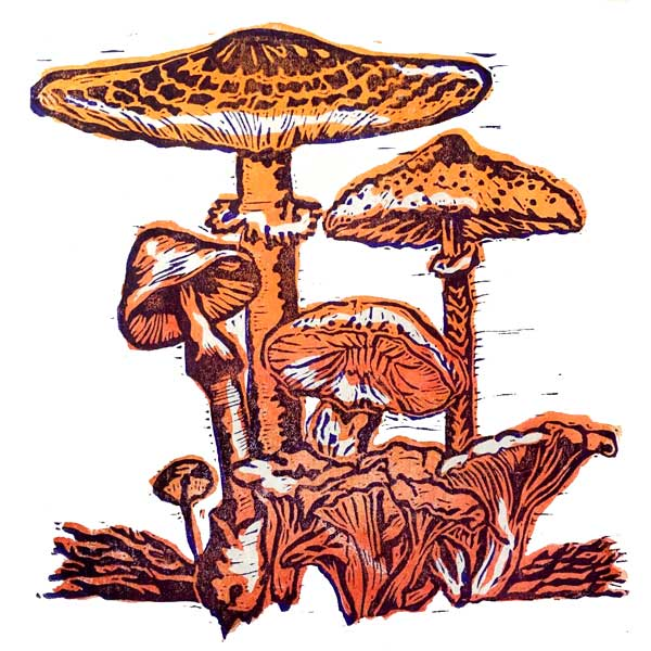 "2 colour forest mushroom linocut - Margaret Hanson. 6.5"" x 6.5"""